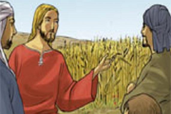 20.07.2014 – 16^ Tempo Ordinario: Il Regno dei Cieli è simile ad un lievito (Mt 13,33)